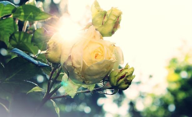 Come proteggere le piante dal sole