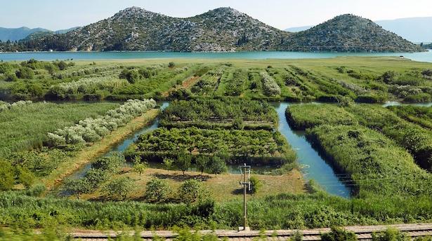 Inquinamento idrico agricolo