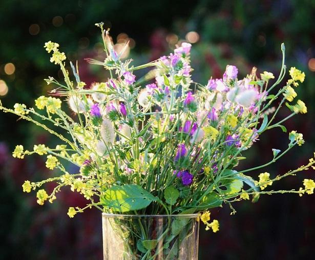 fiore dell'amicizia di campo