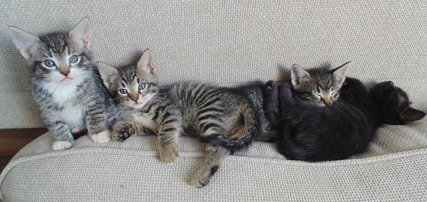 il comportamento dei gatti