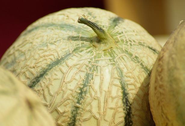 melone coltivazione