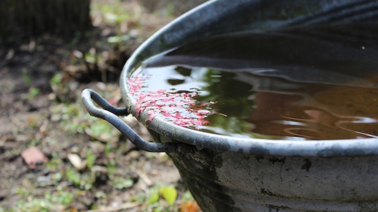 Bagnare Piante Con Bottiglie raccogliere acqua piovana per innaffiare - idee green