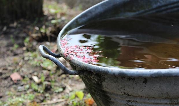 raccogliere acqua piovana