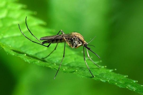 rimedi naturali per allontanare gli insetti