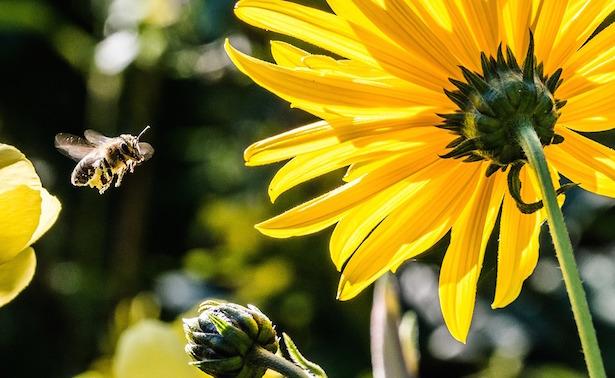api inquinamento