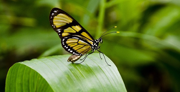 attirare farfalle