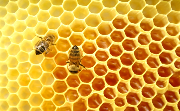 come usare il miele