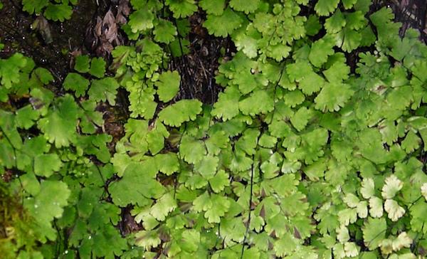 erbe piante rimedi naturali