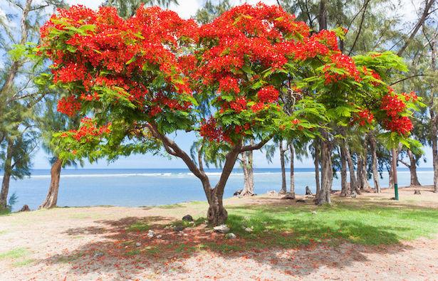 Fiori tropicali da coltivare in giardino idee green - Piccoli alberi da giardino ...