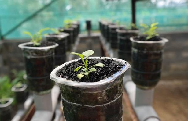 Idroponica fai da te come coltivare senza terra idee green - Mobiletti fai da te ...