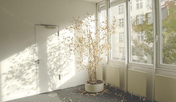 malattie piante appartamento