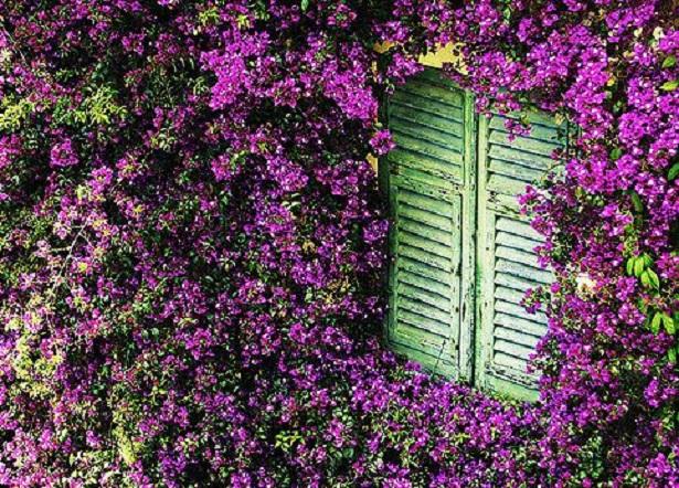 Piante rampicanti come sceglierle idee green for Piante esterno resistenti