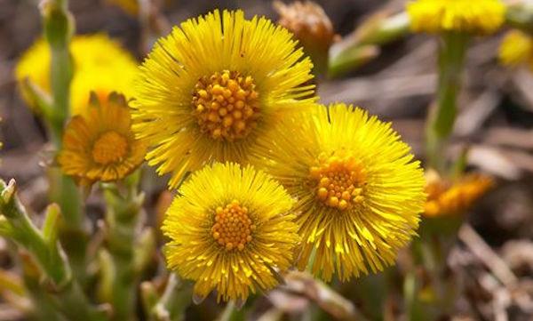 piante rimedi naturali