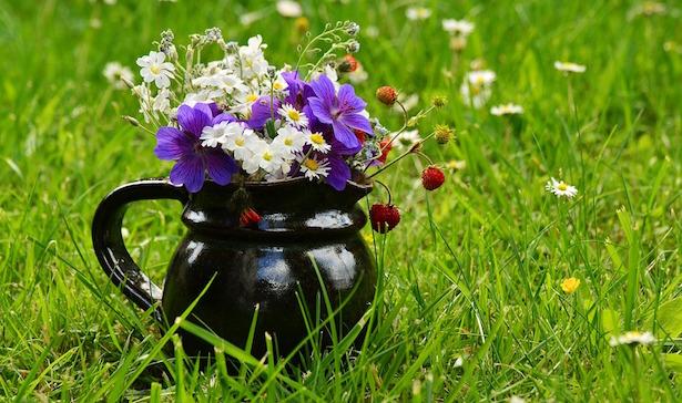 prato fiorito semina