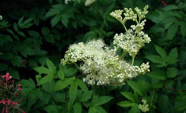 rimedi naturali erbe