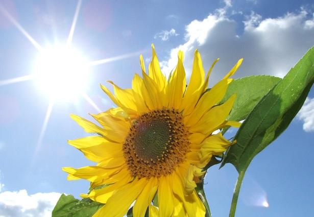 solare termodinamico STEM