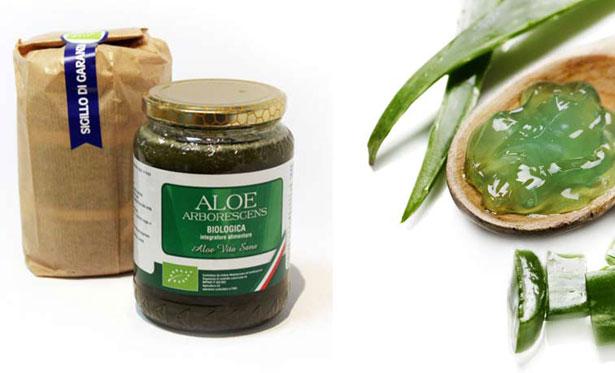 Aloe Arborescens proprietà