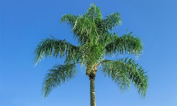 Coltivare palme in giardino idee green - Tipi di giardino ...