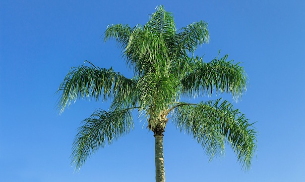 coltivare palme in giardino