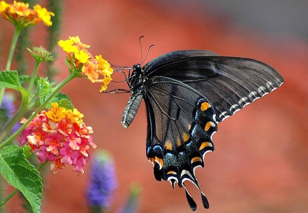 Come allontanare zanzare dal giardino idee green - Contro le zanzare in giardino ...