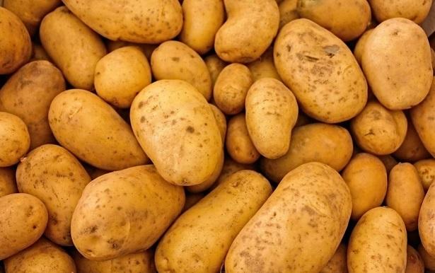 dorifora della patata
