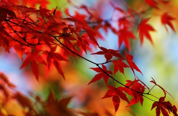 riciclare foglie