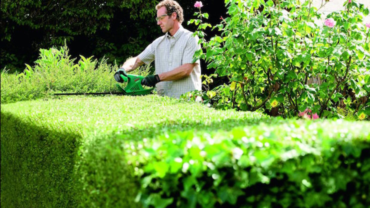 Piante Siepe Crescita Rapida siepe, potatura di mantenimento - idee green