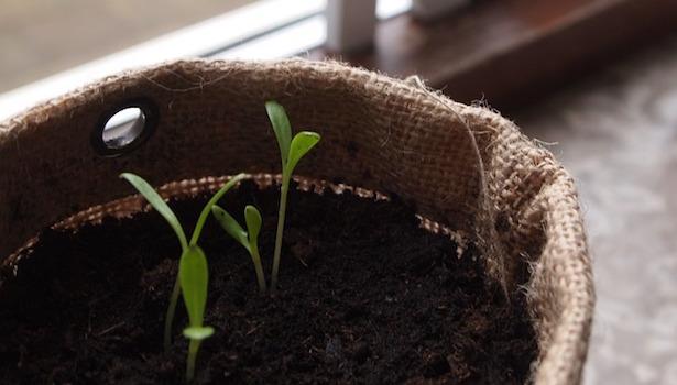 terriccio per piante - idee green