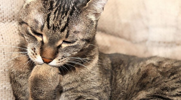 Pet Therapy e Pet Therapist