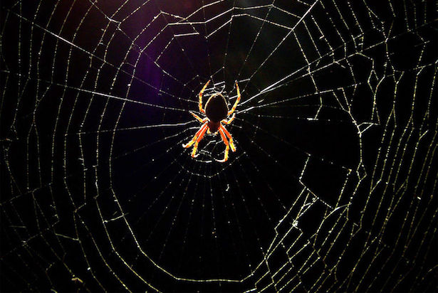 Rimedi naturali contro i ragni in casa