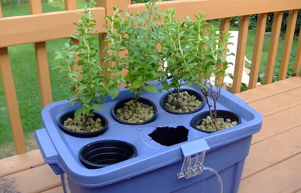 coltivazione idroponica fai da te