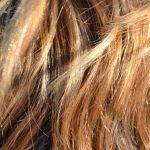Equiseto per i capelli