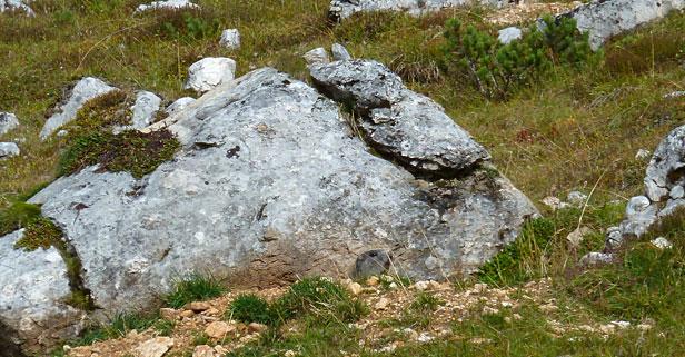 Marmotta all'Alpe Senes