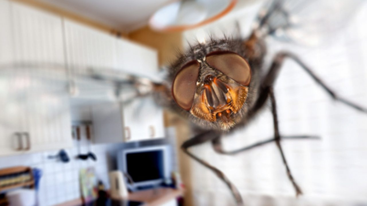 Troppe Mosche In Giardino come eliminare le mosche in casa - idee green