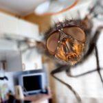 Come eliminare le mosche in casa idee green - Come eliminare le onde elettromagnetiche in casa ...