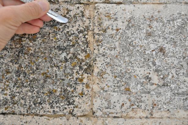Come eliminare muschi e licheni