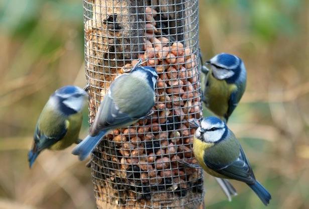 attirare uccelli in giardino