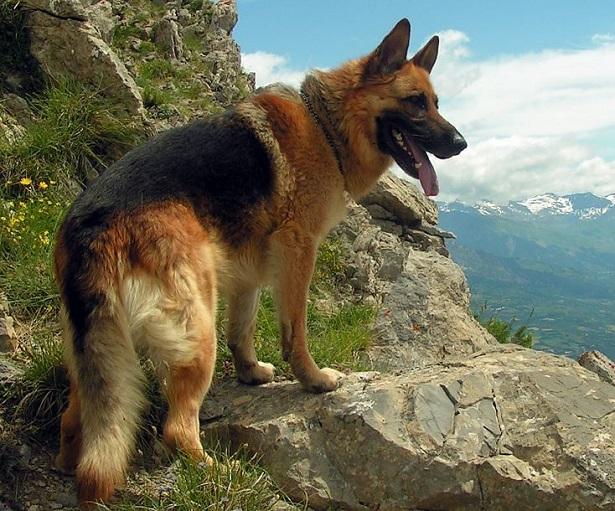 Cani da salvataggio