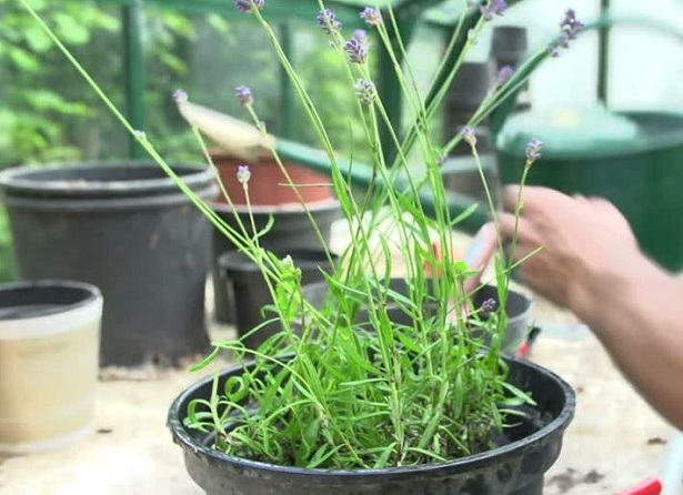 Come annaffiare le piante