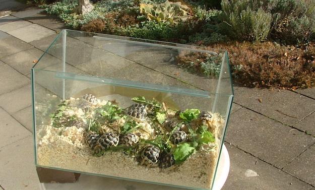 Come costruire un terrario idee green for Contenitore per tartarughe