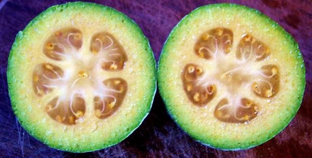 Feijoa frutto e sue propriet for Feijoa frutto prezzo