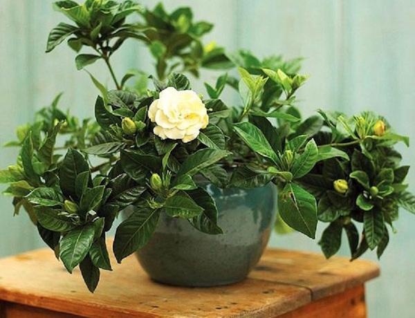 piante da appartamento profumate