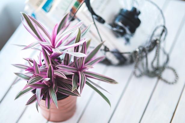 piante da appartametno cure