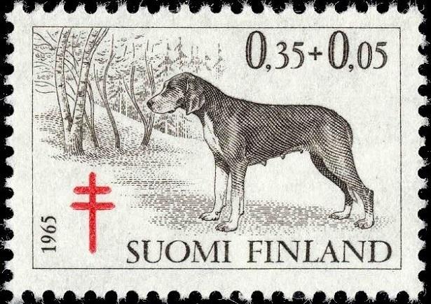 segugio finlandese