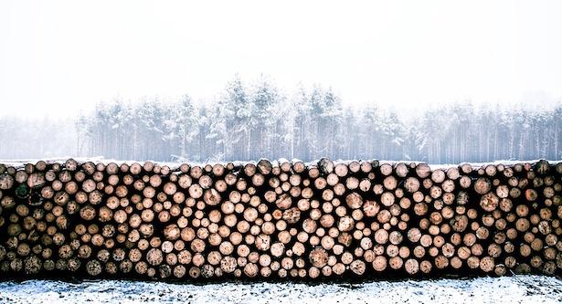 Come tagliare legna da ardere