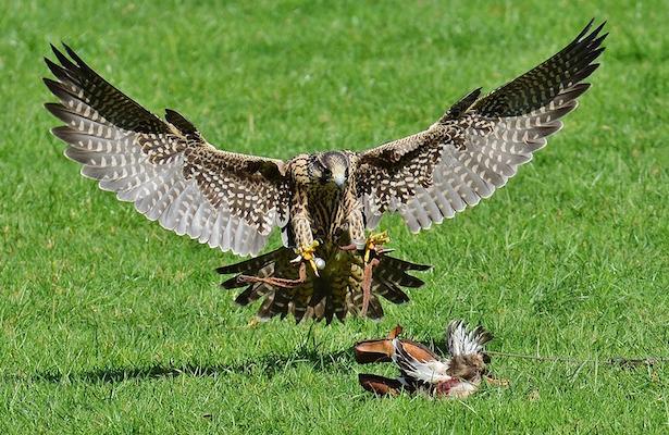 fotografare uccelli attrezzatura