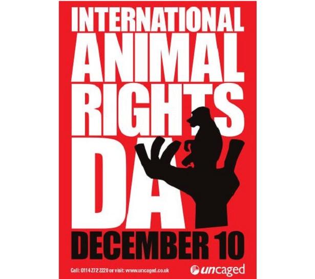 Giornata Internazionale Diritti degli animali