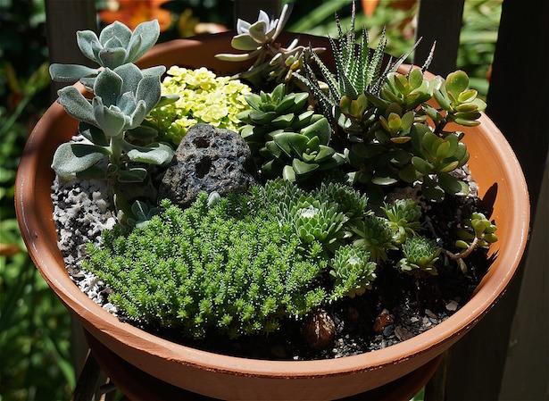 Malattie delle piante grasse idee green for Piante rare