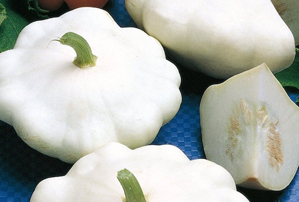 zucca bianca