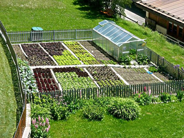 consociazione tra piante da orto idee green